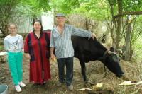 Foto krava 3