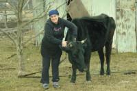 kavkaz krávy1